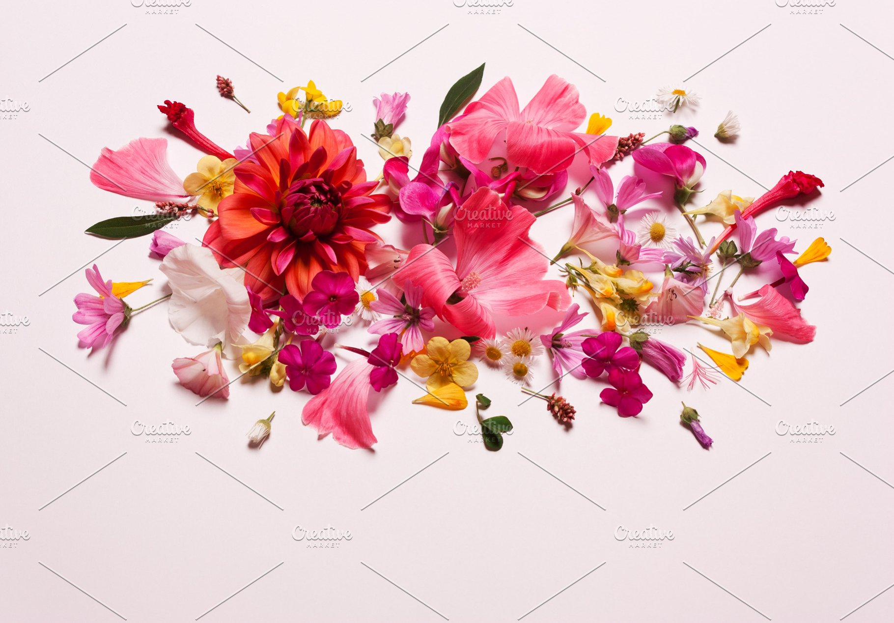Pastel Coral Pink Floral Background High Quality Nature Stock