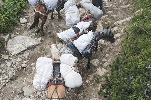 Horses laden with baggage