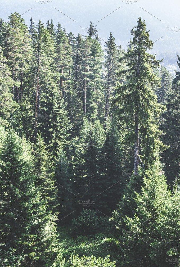 13401.jpg - Nature