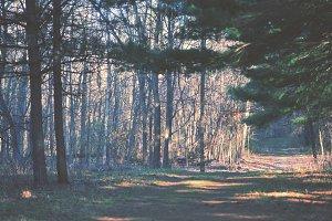 3Lines_woodsy3.jpg