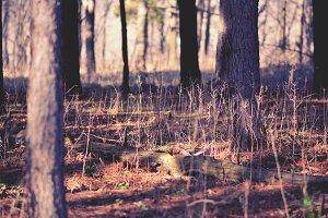 3Lines_woodsy2.jpg