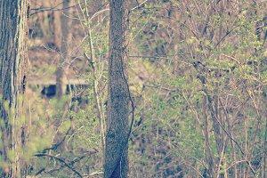 3Lines_woodsy.jpg