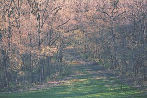 3Lines_woodsy4.jpg