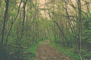 3Lines_woodsy5.jpg