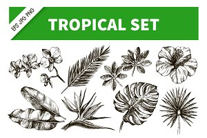 HandDrawn Tropical Plants Vector Set