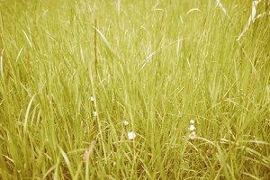 Vintage meadow