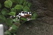 Little Frog by  in Animals