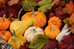 Fall Still Life Display