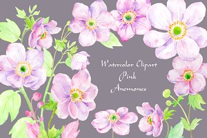 Watercolor Clipart Pink Anemone
