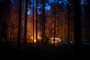 Campfire Light in the Forest Night