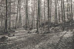 Black and white autumn