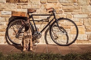 Vintage bike on a stone wall and dog