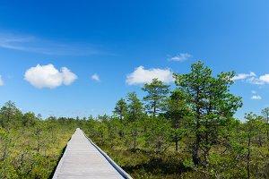 Boardwalk through bog area
