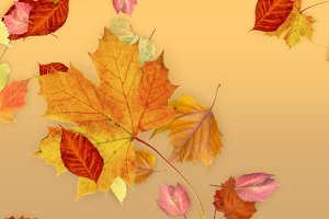 FCPX Generator: Leaves - Fall