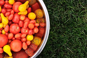Tomato Harvest on Grass