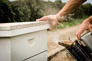 Beekeeping - Smoking the hive