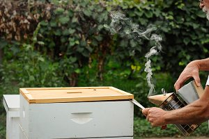 Beekeeping - Smoking the Hive 4