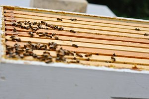 Beekeeping - Beehive from the top 2
