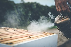 Beekeeping - Smoking the Hive 3
