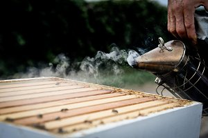 Beekeeping - Smoking the hive 2