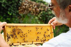 Beekeeper examining bees