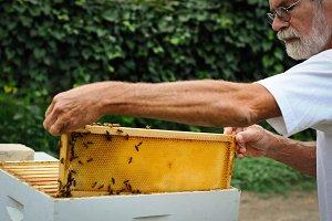 Beekeeper removing honey comb