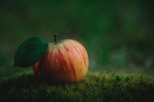 A fallen apple