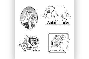 Animal planet Logo For Your Design