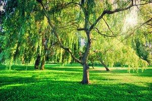 Green summer park landscape