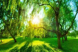 Green summer park panorama
