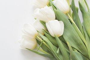 White Tulips | Stock Image