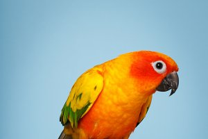 Parrot N Pumpkins #3