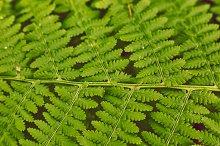 vintage soft green fern leafs