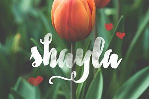 Shayla + Extra