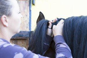 girl combing a horse mane
