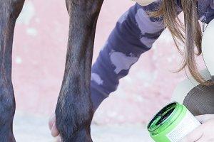girl grooming her horse