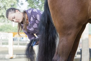 young woman grooming a horse