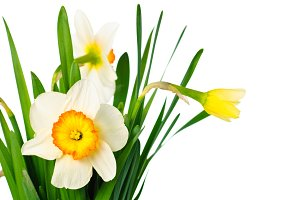 narcissuses bouquet