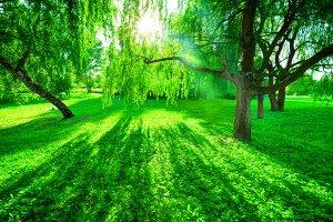Park in sunshine. Summer