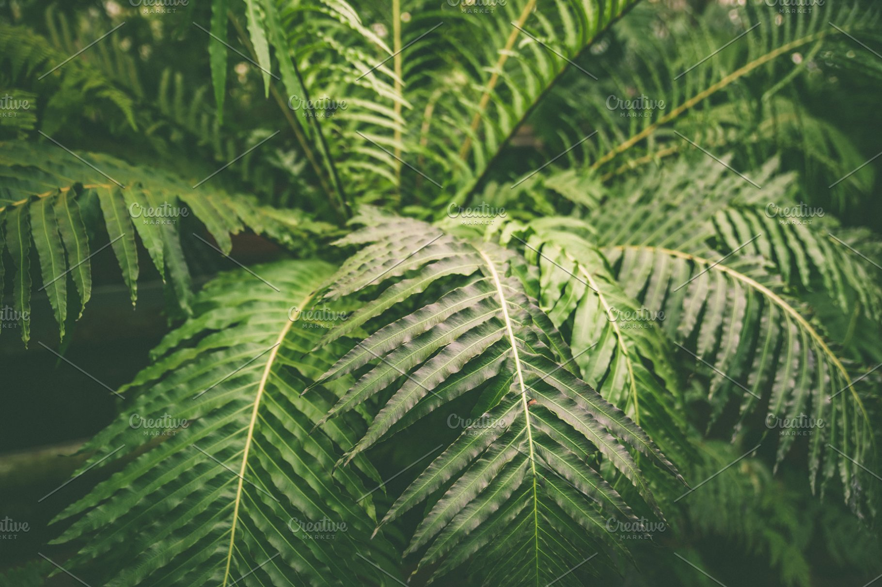 Green Leaves Of Tropical Fern Plants High Quality Nature Stock