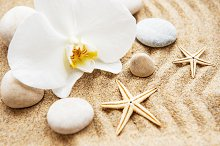 Orchids and stones by  in Holidays