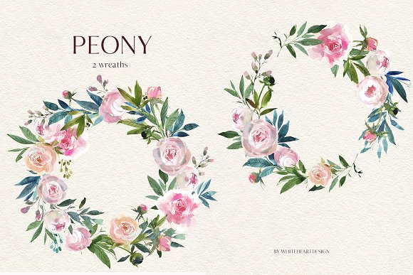 Watercolor peony. Floral clipart illustrations creative