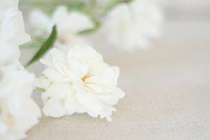 White Roses on Linen