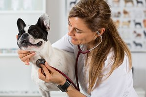 By listening to a dog Veterinary bul