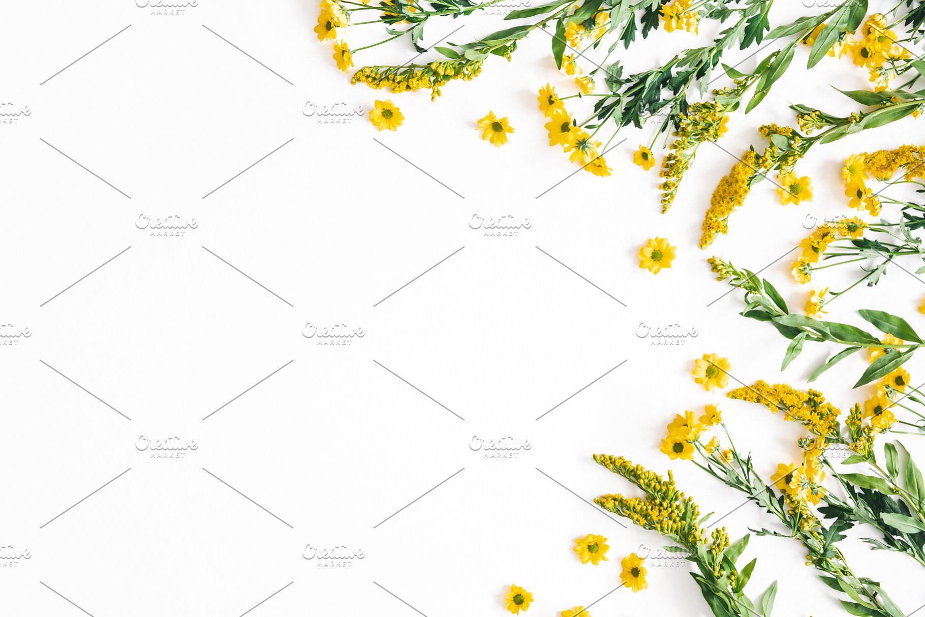 Yellow Flowers On White Background High Quality Arts