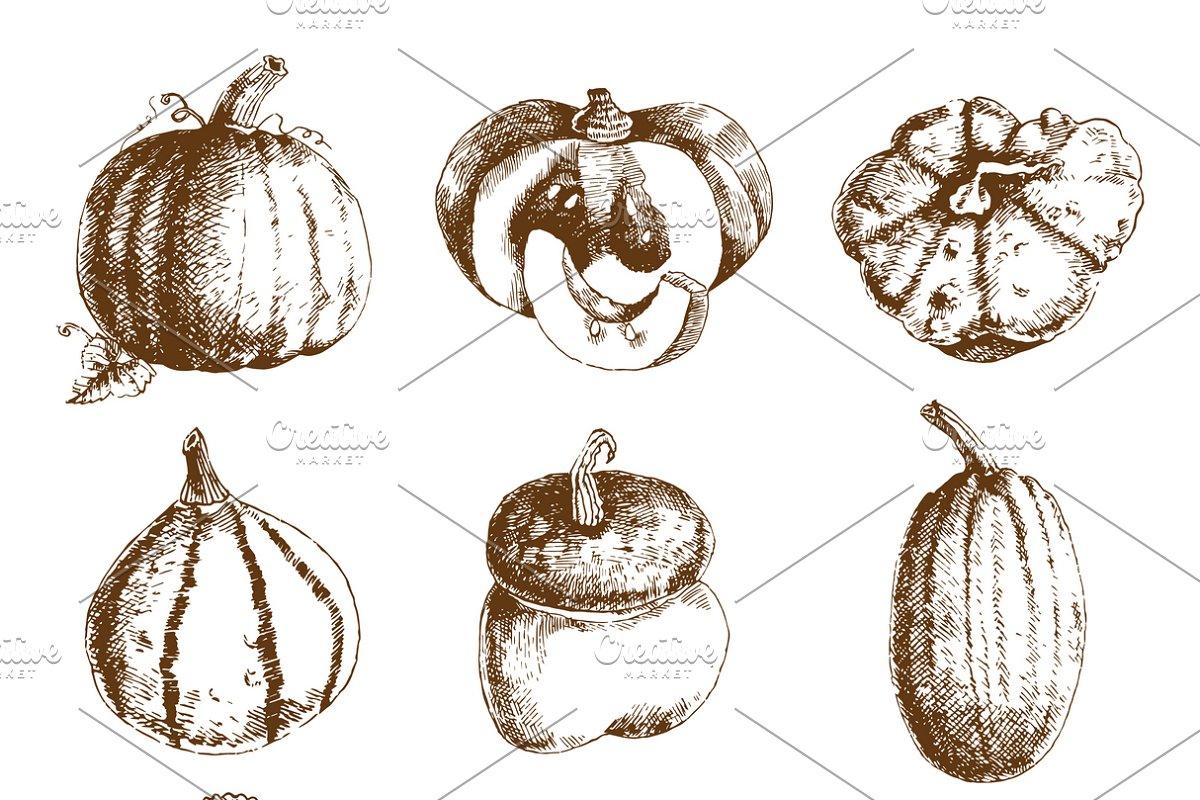 Pumpkin hand drawn icons set