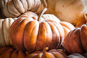 Pumpkins #2
