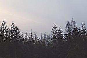 Swedish Tree Tops