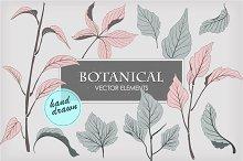 Botanical vector elements