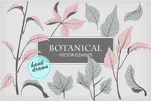 Botanical vector elements